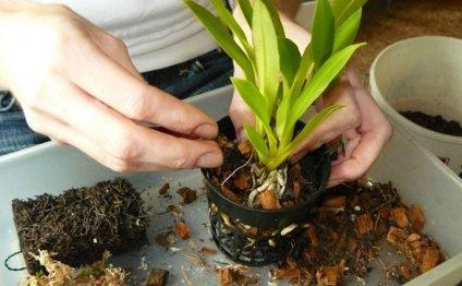 Как ухаживать за орхидеей в
