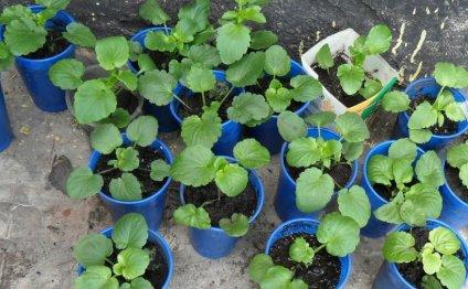 Цветы и клумбы: Как вырастить
