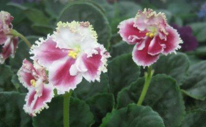 цветы апрель май 2014 460